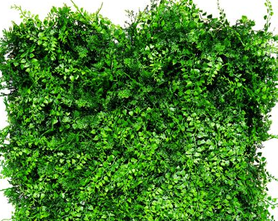 greenery wall with ferns