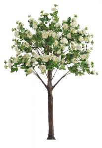 flowering rose tree with cream colored flowers for rental