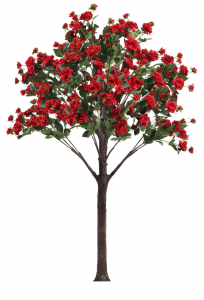 5 foot tall red flowering rose tree